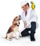 Доктор Вет. Сеть ветеринарных аптек. Адреса магазинов